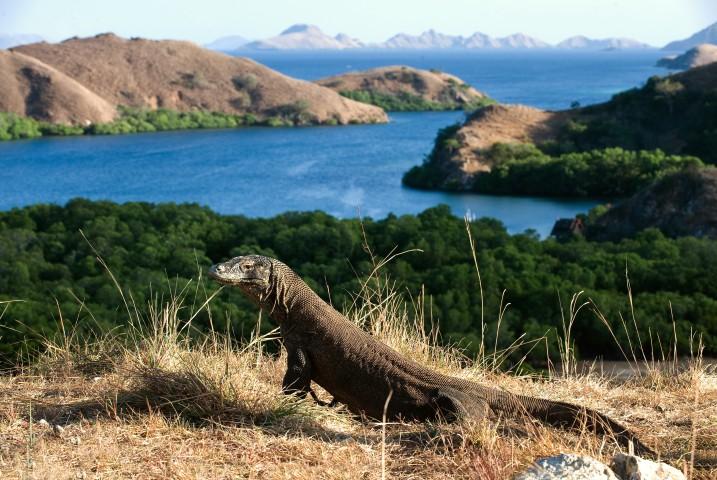tips solo traveling ke pulau komodo 1